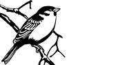 vector illustration of the bird on white background