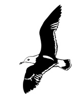 vector silhouette flying sea gulls on white background