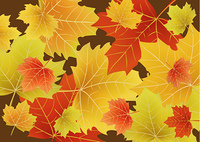 Vector illustration of Beautiful autumn leaves drift across the page.