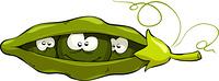 Cartoon pea pod looks out, vector illustration