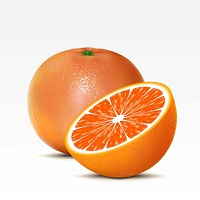 Two grapefruits on a white background
