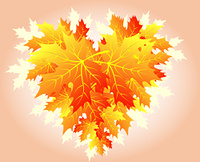 Autumn heart made from falling maple leaves