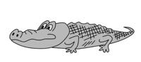 gray crocodile on white background, vector illustration
