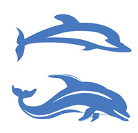 two dolphins on white background, vector illustration