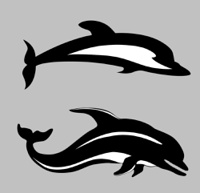 two dolphins on gray background, vector illustration