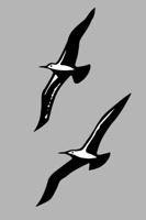 flying birds silhouette on gray background, vector illustration