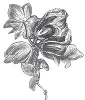 Vintage style print og flowers.