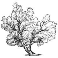 Sketch of leaning tree.
