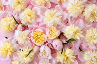 colorful pink and yellow flowers background texture pattern