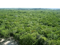 jungle aerial view in central america Mexico green nature background