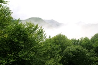 foggy mountains forest fog scenics nature landscape