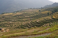 Terraced farming in Himalayas, Nepal