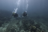 Underwater scene with scuba divers