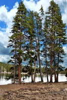 Pine Trees By The Lake And A Beautiful Sky