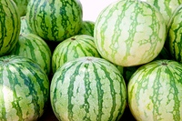 green seed less watermelon in fruit market from Spain