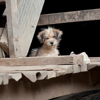 Puppy on a wooden plank, Huay Pu Keng, Mae Hong Son Province, Thailand