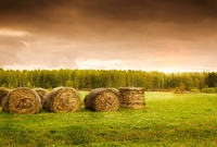 Bales of Hay after harvest, selective focus on nearest