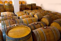 wine barrels oak wood in mediterranean winery
