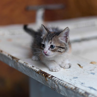 Close-up of a kitten, Marrakesh, Morocco