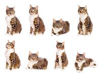 set of cat isolated on white background