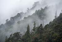 Fog over a forest, Trongsa District, Bhutan