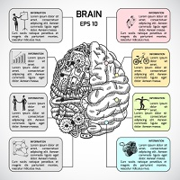 Brain hemispheres sketch infographic set with intellect and creativity symbols vector illustration