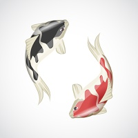 Chinese japanese koi fish red carp water animal isolated on white background vector illustration