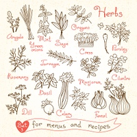 Set drawings of herbs for design menus, recipes and packages product. Vector Illustration.