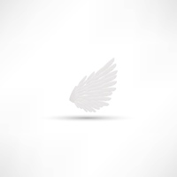 Vector isolated white wing of a bird