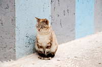 alone cat in africa morocco and house background