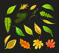 Leaf collection, vector