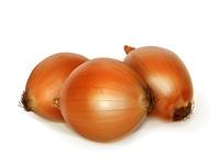 Onion vector illustration