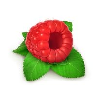 Raspberries and mint, detailed vector