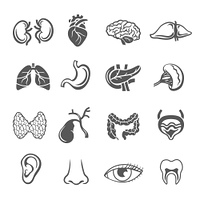 Human organs black icons set with eye ear and heart isolated vector illustration. Human Organs Set