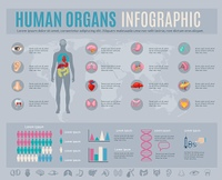 Human organs infographic set with internal body parts symbols and charts vector illustration. Human Organs Infographic Set