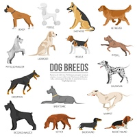 Dogs breed set. Dogs breed set with bull terrier boxer poodle isolated vector illustration