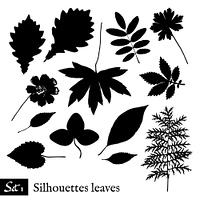 Set of Leaf Silhouettes. Isolated on white. Vector collection.