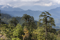 Trees with mountain range in the background, Dochula Pass, Thimphu, Bhutan