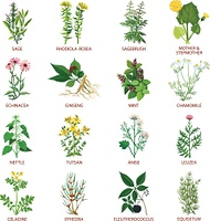 Medicinal Herbs Icons Flat. Set of color flat icons healing herbs with name using in medicinal practice and phytotherapy vector illustration