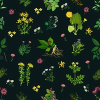 Medicinal Herbs Seamless Pattern. Seamless color pattern with dark background depicting different medicinal herbs vector illustration