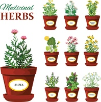 Medical Herbs In Pots With Labels. Set of medical herbs in pots with labels of leuzea sage mint mother and stepmother tutsan echinacea isolated vector illustration