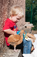 A boy feeding his young chickens