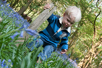 Toddler playing in a bluebell woodland