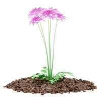 pink chrysanthemum flower isolated on white background. 3d illustration