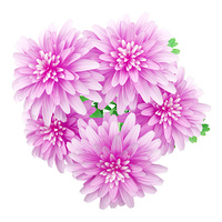 top view of pink chrysanthemum flower isolated on white background. 3d illustration