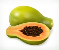 Papaya fruit. Vector icon