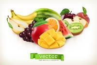 Mango and juicy fruits, vector illustration isolated on white