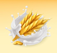 Wheat and milk splash. Barley realistic illustration. 3d vector icon
