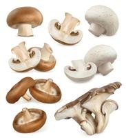 Edible mushrooms. Shiitake, oyster, cremini, white button. 3d vector icons set