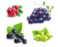 Realistic Berries Set. Realistic berries set with cranberry grape gooseberry and black currant on white background isolated vector illustration